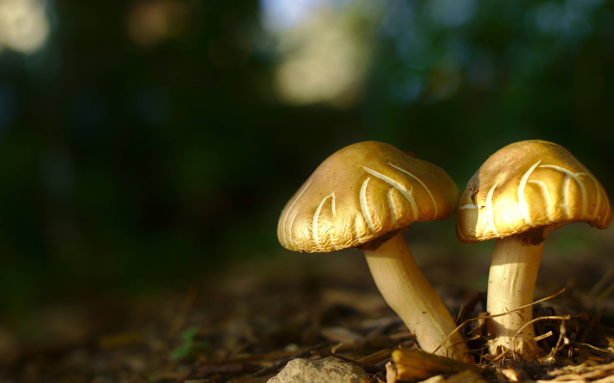 mushroom family wallpaper desktop - photo #17